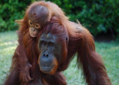 Borneo-Tanjung-Puting-Kalimantan