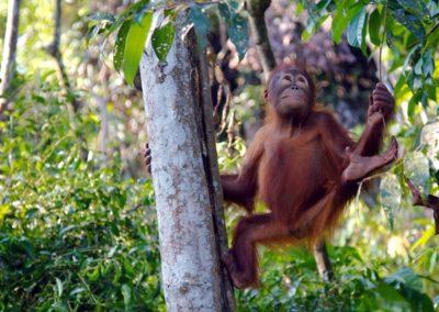 Tour of Borneo 3 Days / 2 Nights