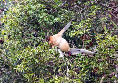 Orangutan Travel 5 Days / 4 Nights