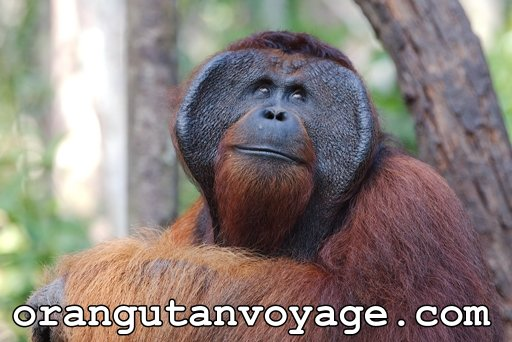 Tour of Borneo. 3 Days /2 Nights